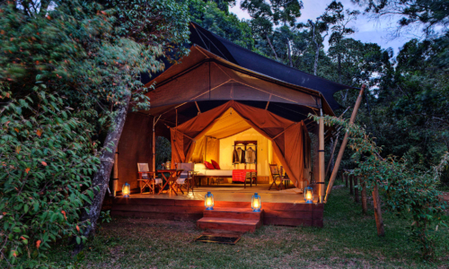 Elephant Pepper Camp