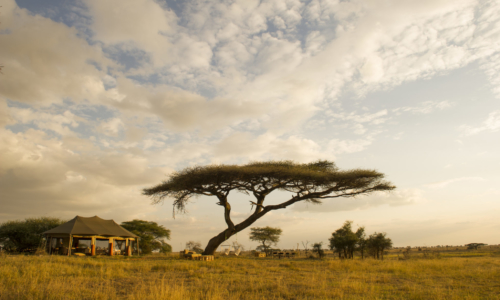 Namiri Plains Camp